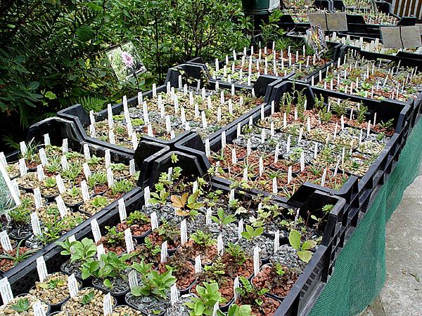 pflanzen f r steingarten pflanzen f r steingarten pflanzen japanischer steingarten pflanzen f. Black Bedroom Furniture Sets. Home Design Ideas